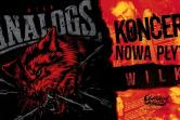 The Analogs - Mrągowo