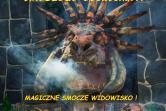 Smokmistrz Gerwazy i Tajemnica Smoczego Eliksiru - Gdynia