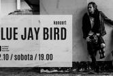 Blue Jay Bird - Gdańsk