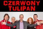 Czerwony Tulipan - Łódź